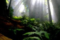 41-national-parks-1600F