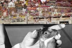 P_rat