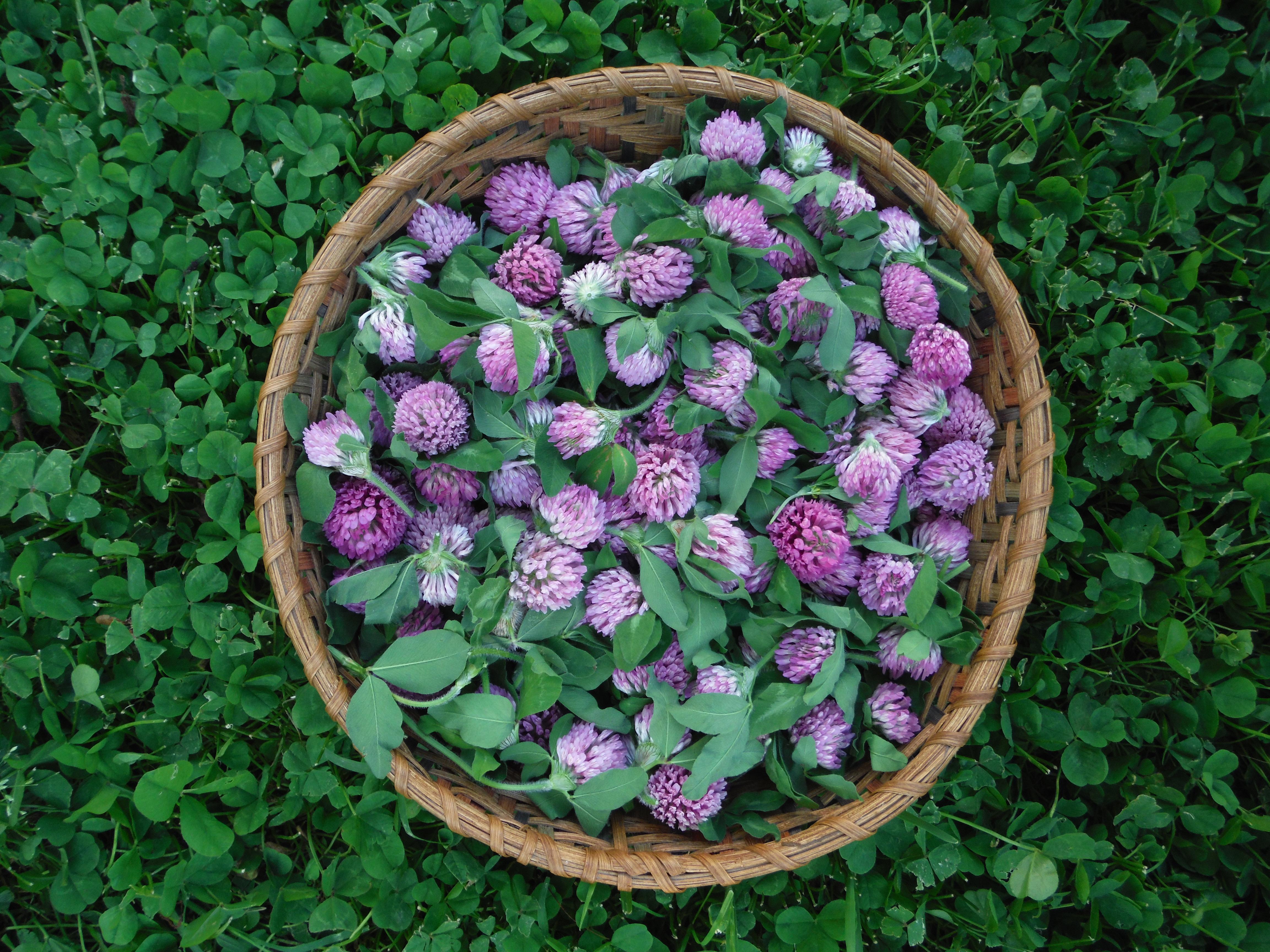 Spora Studios: Homegrown & Handmade Herbal Products