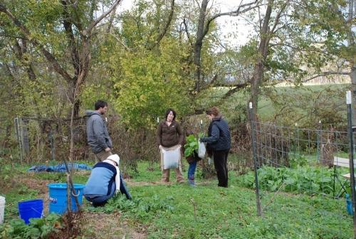 Garden Foraging4